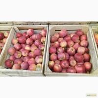 Фермерське господарство реалізовує яблука з газових камер