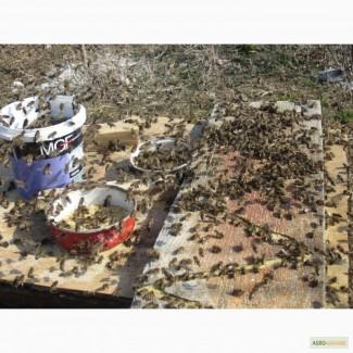 Весення подкормка пчел после облета