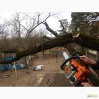 Удаление деревьев киев, спил, валка, обрезка, корчевание пней