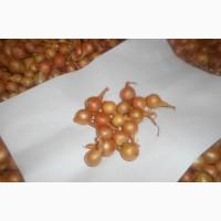 Продам лук-севок разные фракции.урожай 2017 года