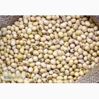 Семена сои Аполло от отечественного производителя