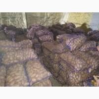 Продам товарный картофель сорта Гранада