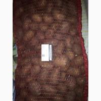 Продам картофель товарный