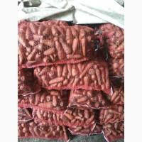 Морковь сорт «Абако»
