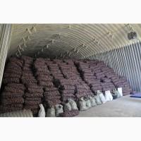 Картофель оптом из Беларуси от производителя, 4, 5 грн./кг