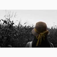 Купим кукурудзу, побочку кукурудзы, зерноотход, отходы 1 кат
