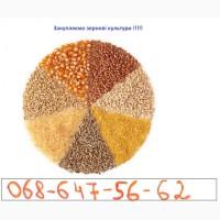 Купляємо зернові:Кукурудза, Пшениця, Соя, Тритикал, Жито, відходи кукурудзи та пшениці