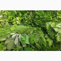 Продам зелень(укроп, петрушка, кинза, шпинат, щавель, руккола, базилик, мята, салаты, лук)