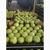 Закупаю яблоки