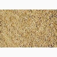 Закупаем Ячмень, Пшеницу с места от 120т Кринички от 120т