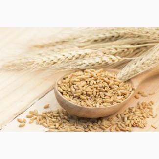 Продам КРУПУ пшеничну