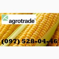 Семена кукурузы. Maisadour Semences - Гибрид Плевен ФАО 270, урожай 2020 года