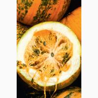 Продам семена голосемянной тыквы ГЛЯЙСДОРФЕР ОЛКЮРБИС (сорт), RWA, Австрия
