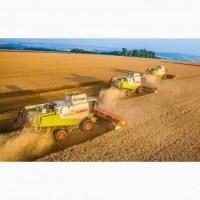Купим пшеницу продовольственную и фуражную.По всей Украине
