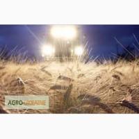 Закупим жито, пшеницю, кукурузу