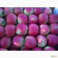 Фермерське господарство Агросад + пропонує яблука на продаж. Урожай 2016 року