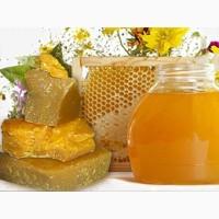 Компания ГОЛД ХАНИ покупает пчелиный мёд