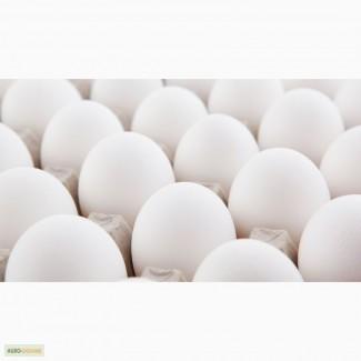 Вкусные и свежие яйца категории С-1 и С-0