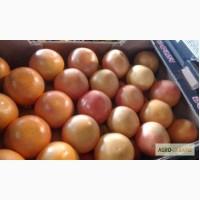 Томаты, перец, мандарины, виноград поставки из Турции