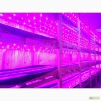 Продам LED освещение для растений