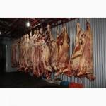 М#039;ясо Свіже Полотуші