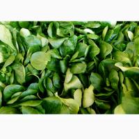 Продам салат корн