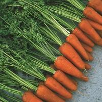 Куплю морковь от 7 тонн/_2сорт_Шантане Абака