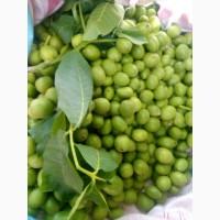Зелёный грецкий орех молочной (восковой) зрелости