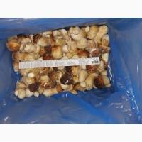 Продам карпатські білі гриби