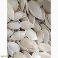 Продам семена тыквы товарной на экспорт сорта- Украинская многоплодная фасоль чечевица