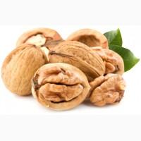 Куплю ядро грецкого ореха от 3, 5 т
