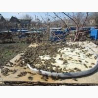 Мука соевая для весенней подкормки пчел 1 кг