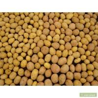 Куплю насіннєву картоплю в великих об#039;ємах