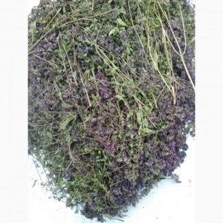 Душица (орегано) трава