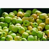 Купим яблоки для переработки вся Украина