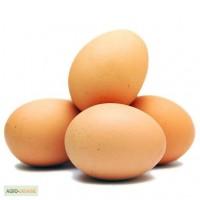 Продаем яйца С1