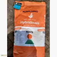 Продам кукурудзу Роналдініо по низкой цене