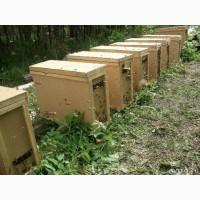 Продам пчелпакеты