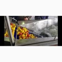 Барботажная моечная машина для ягод овощей фруктов с выгрузочным транспортером