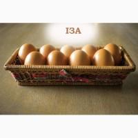 Свіже столове яйце
