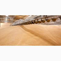 Продам пшеницю 3 клас перепис на елеваторі