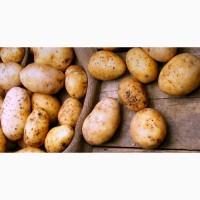 Продам молодой картофель с Египта