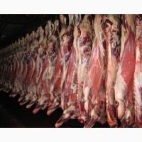 Продам Мясо говядины на кости