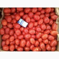 Продаю помидор - сливка 3402 оптом