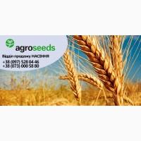 Семена озимой пшеницы Богдана (элита) под КОМПЕНСАЦИЮ - 80%, Харьковская область