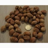 Продам горіх ліщину (фундук)