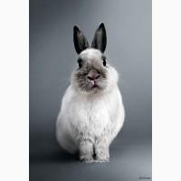 Кролі куплю живою вагою