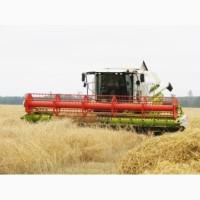 Аренда комбайнов на уборку пшеницы и рапса