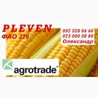 Насіння кукурудзи Pleven - Maisadour Semences (ФАО 270 ) 2020 рік