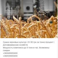 Услуги сушки зерновых, бобовых и масличных культур